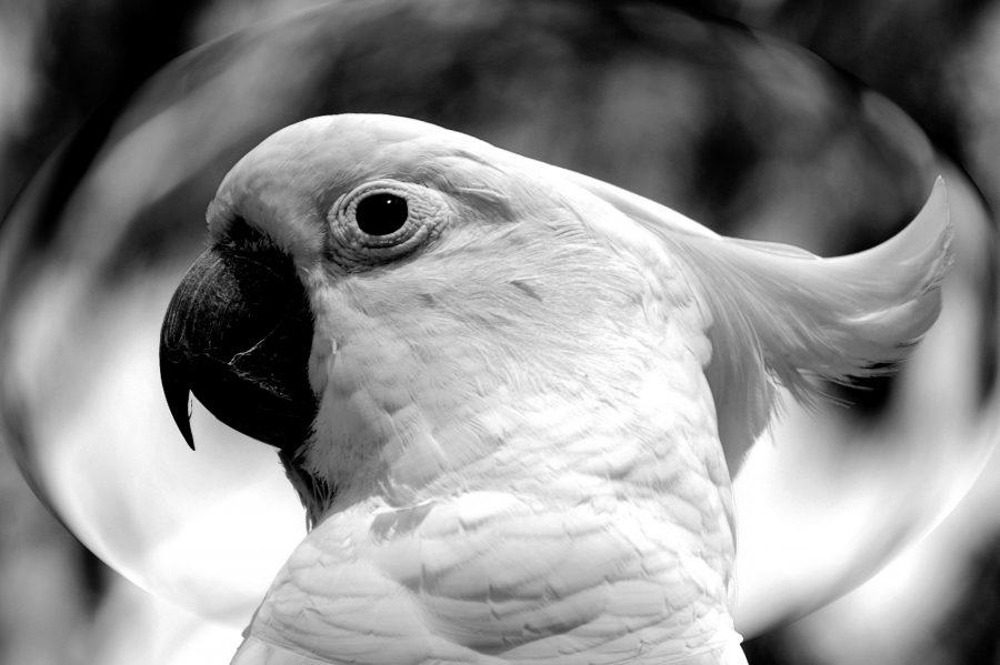 Ateliers de découverte 14 avril 2018  Le langage du perroquet