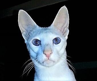 [Emission Radio] Le chat, chez lui partout, Eric BARATAY (RadioTéléSuisse)