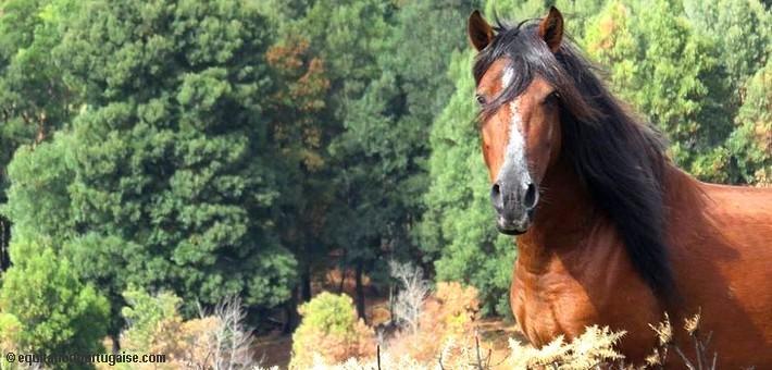 16/17 Novembre – IIe Congrès sur le poney Garrano