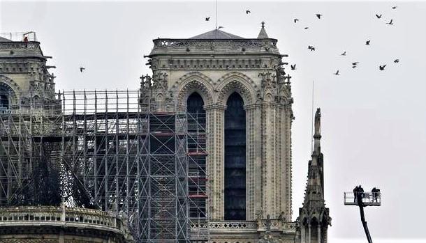 La Cathédrale Notre-Dame de Paris: un écosystème à rebâtir, P.Delahaye