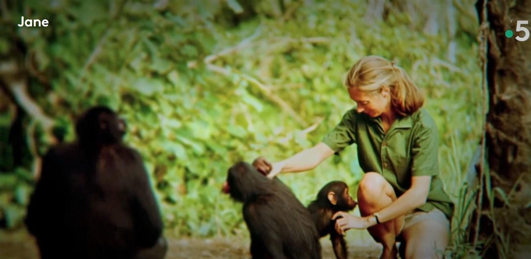 [A revoir jusqu'au 28 janvier] Jane Goodall, France 5