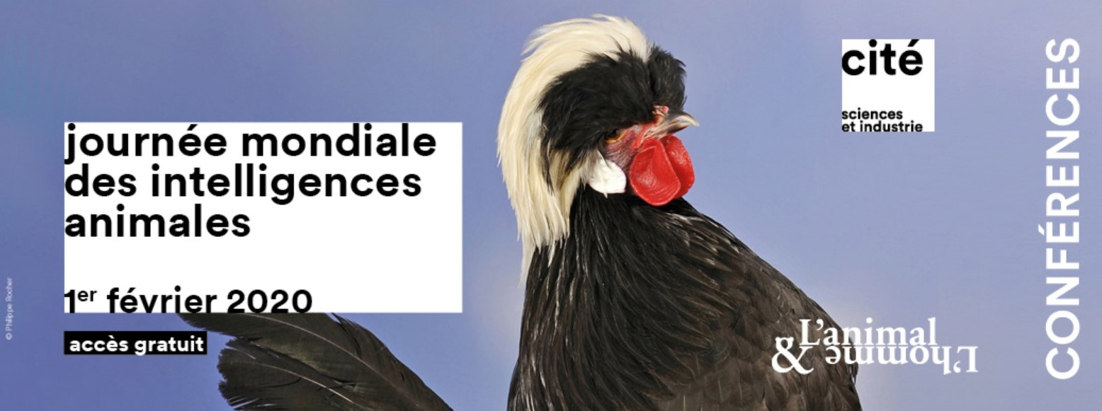 1er février, Journée mondiale des intelligences animales 2020