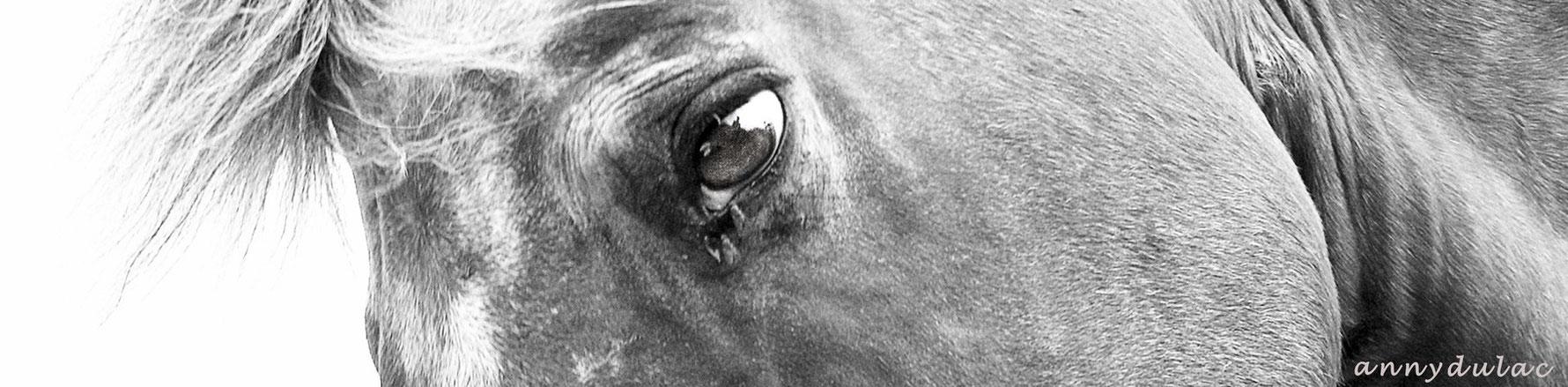[SÉMINAIRE ANNULÉ 28 mars] Séminaire SFZ: Comment collaborer avec le cheval ? Signaux de communication et partenariat social, Patricia FAURE