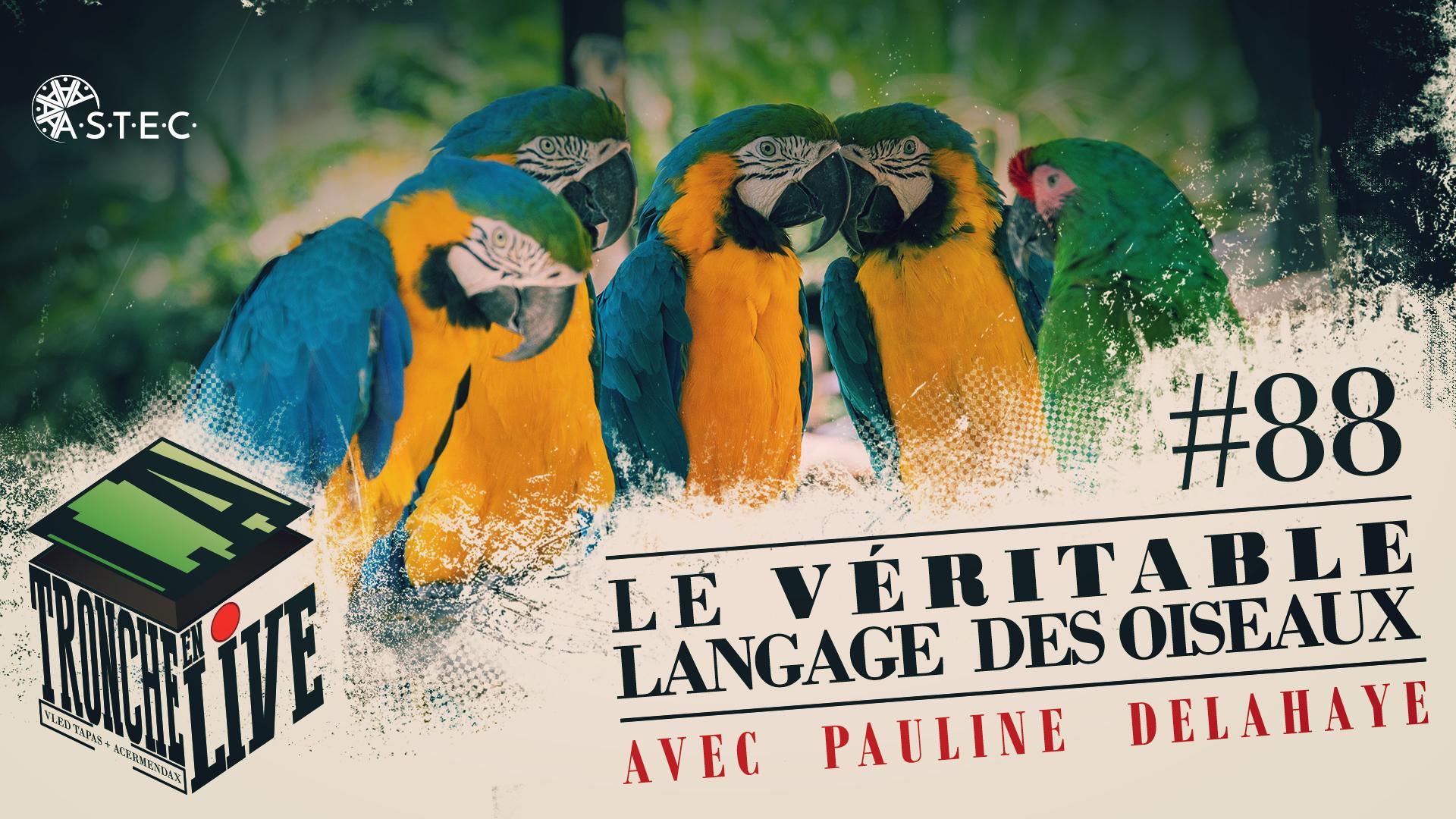 {13 mai – 20h] Le véritable langage des oiseaux, par Pauline DELAHAYE