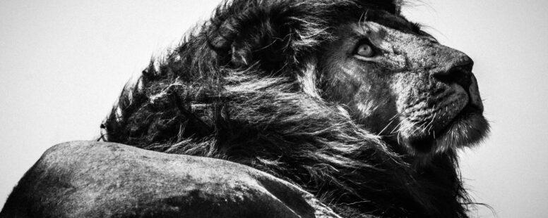 [Séminaire SfZ – 5 juin – 14h] Émotion animale: la preuve par l'image, Laurent BAHEUX
