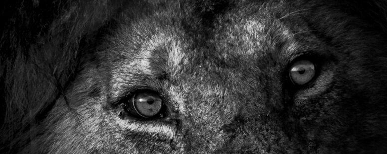 [Séminaire SfZ – 26 juin – 14h] La force du regard, par Odile TAMBOU