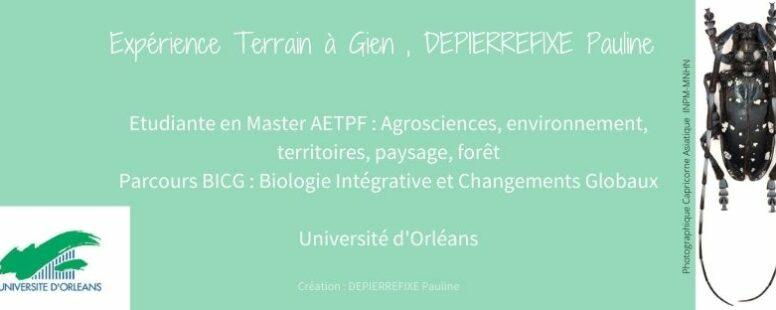 [Expérience de terrain en Master 1 – Univ d'Orléans] Chiens renifleurs de capricornes asiatiques par Pauline Depierrefixe